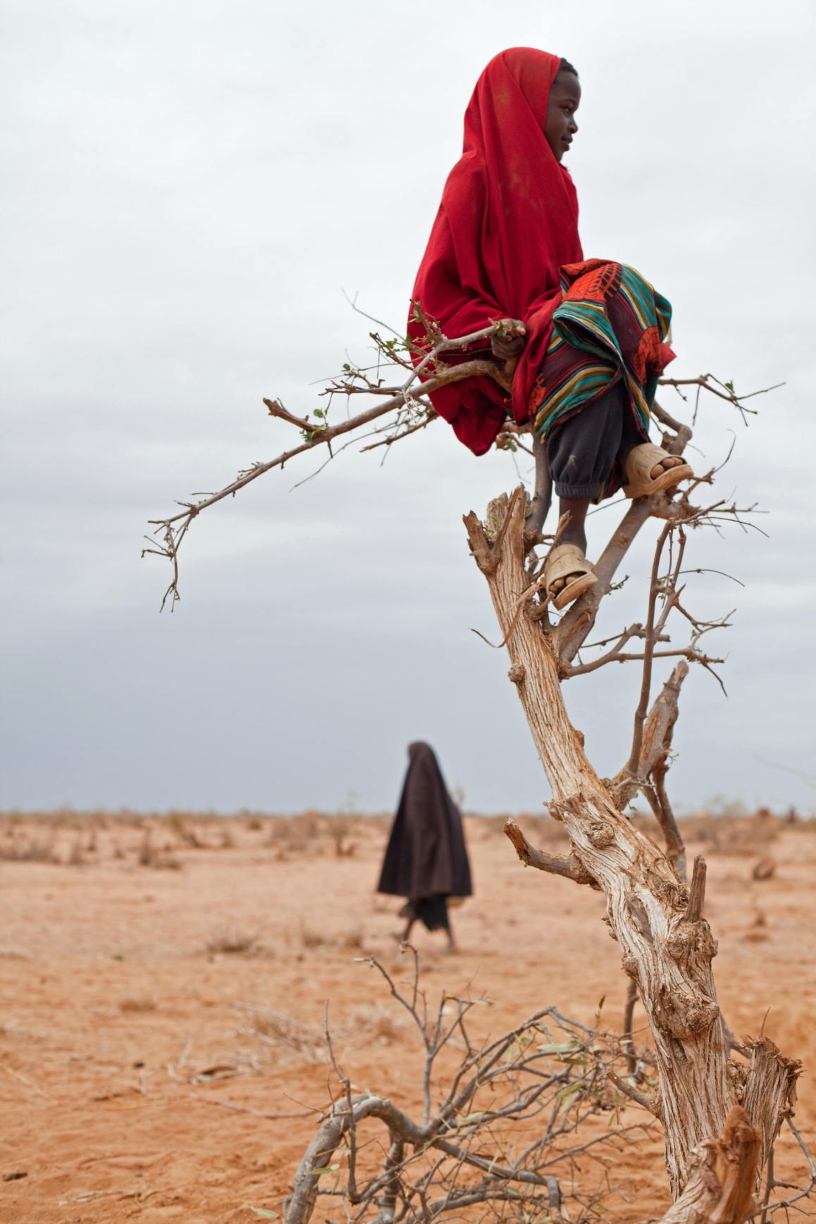 A Somali refugee girl sits perched on a tree in Ifo camp. Image:brendanbannon.com