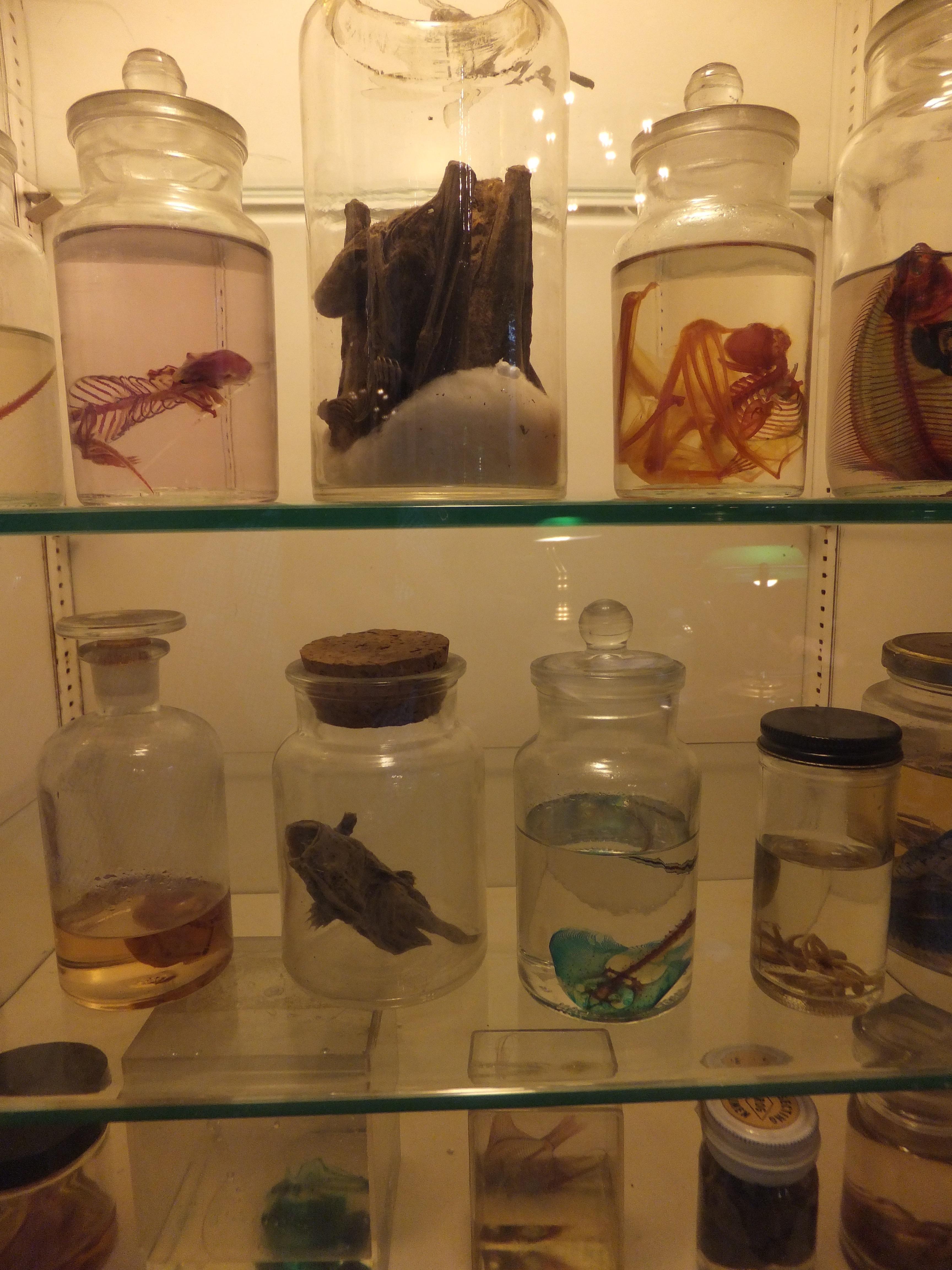 Display jars, Morbid Anatomy Library