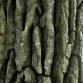 Tree Bark by Odalaigh via Flickr Creative Commons
