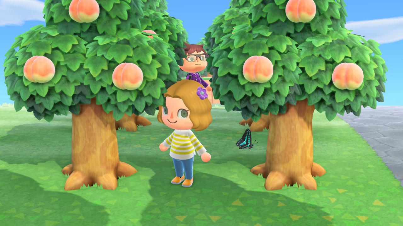 A tour of the peach orchard. <em>Nintendo/Mark Riechers (TTBOOK)</em>