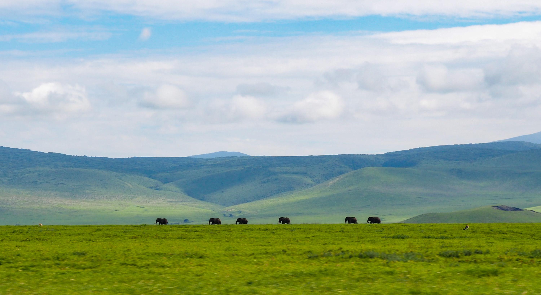 &nbsp;A parade of elephants in the Ngorongoro Crater. <em>Steve Paulson (TTBOOK)</em>