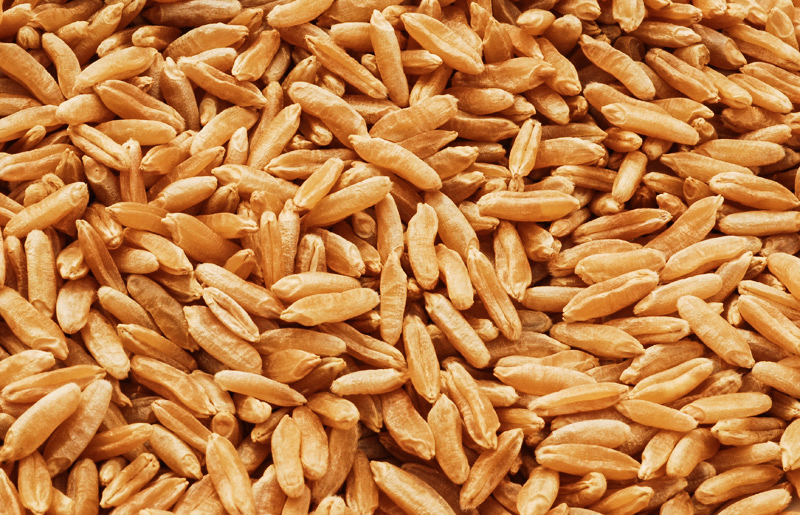 Kamut grain.