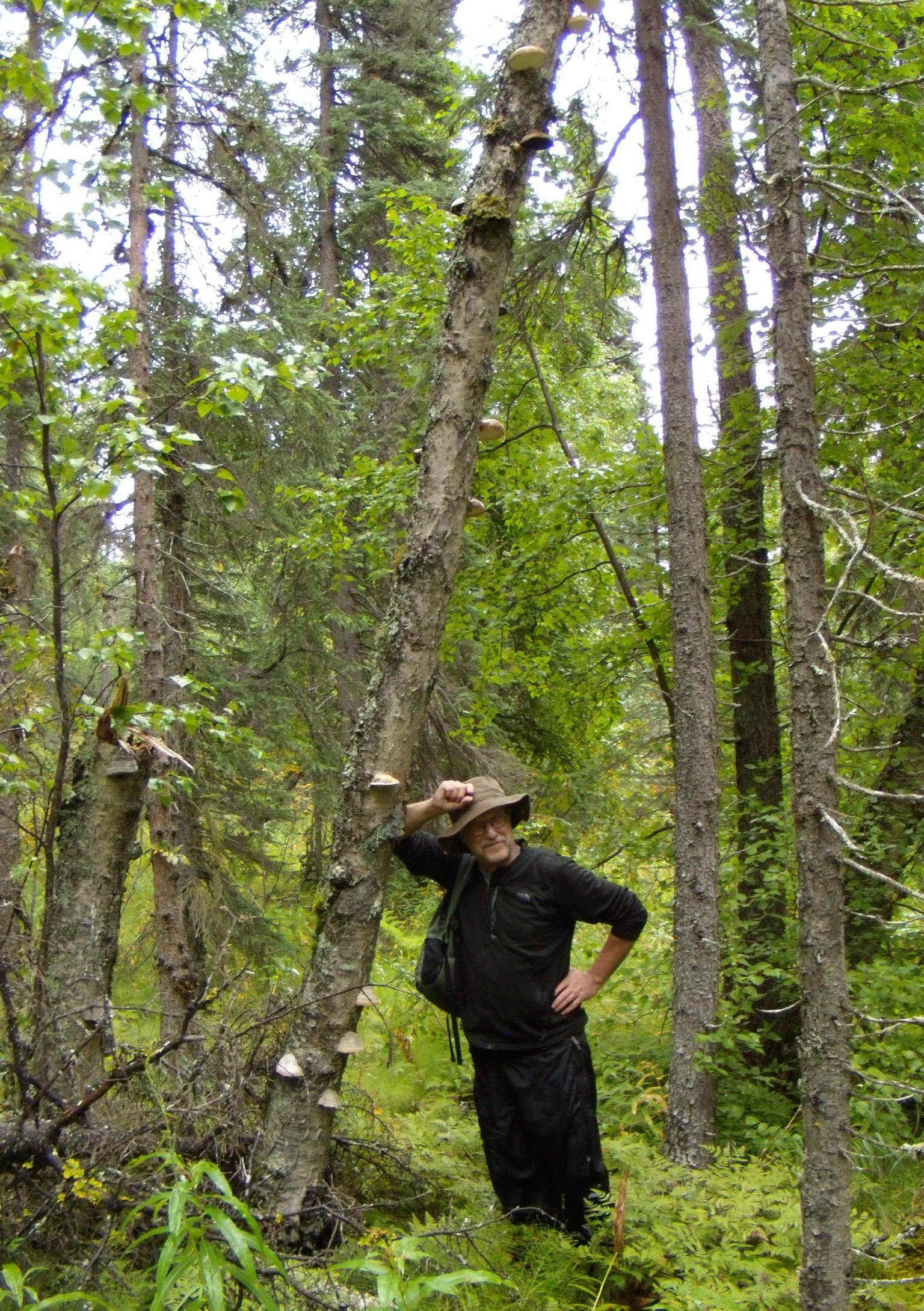Lawrence Millman with bracket fungi in Alaska. <em>(Gail Coray)</em>