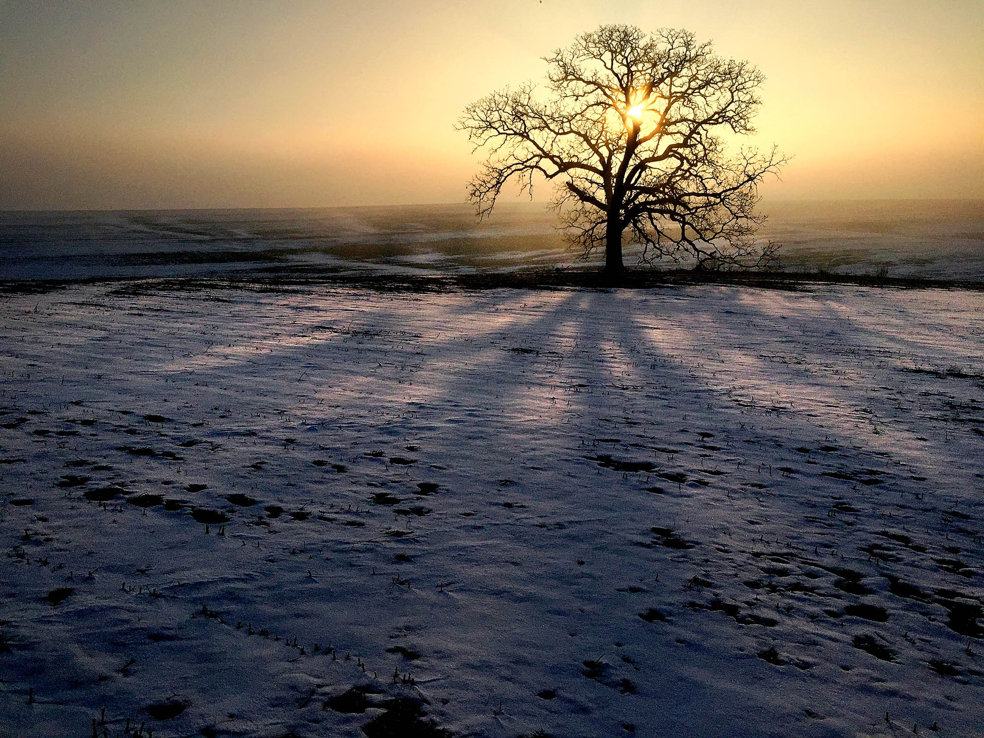 That Tree is an ancient Bur Oak growing on the edge of a cornfield near Platteville, WI. Using only his iPhone 4S, Mark Hirsch photographed the tree every day from March 24, 2012 until March 23, 2013 capturing a year long snapshot of life in and around the ancient oak. Today, Hirsch still photographs his storied tree with an iPhone sharing the images on Facebook and Instagram. <em>Mark Hirsch (Mark Hirsch Photo LLC)</em>