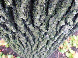 A tree recorded by David Haskell.