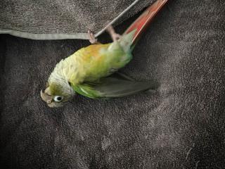 Birdle