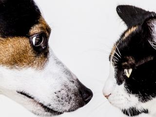Dog and cat facing each other
