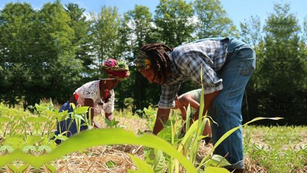 Farmers work the fields on Soul Fire Farm as part of their workshop series. These workshops are designed to teach Black, Indigenous, and people of color specific farming and homesteading practice that they can apply on their own farmland.