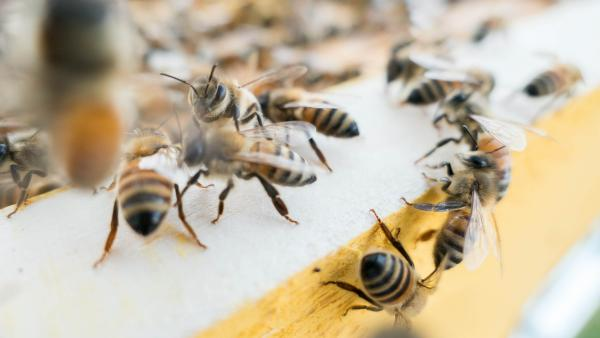 many bees