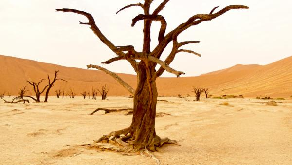 a barren tree in Nambia