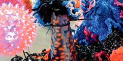 """Plastic crochet corals from the """"Crochet Coral Reef"""" project by Christine and Margaret Wertheim and the Institute For Figuring."""