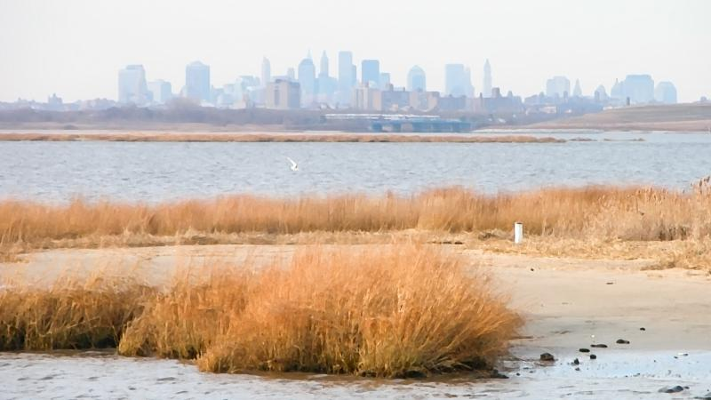 a view of the Manhattan skyline from the Jamaica Bay Wildlife Refuge in Queens.