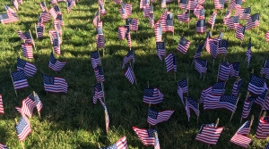United States flags stuck in the ground