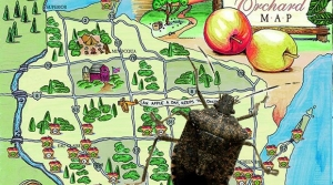 An collage of a brown marmorated stink bug and an illustrated map of Wisconsin apple orchards