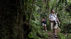 People walking in rainforest