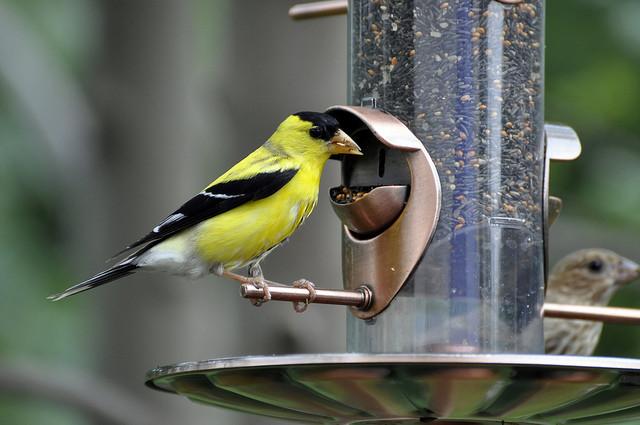 bird feeder, likeaduck (CC-BY-SA)