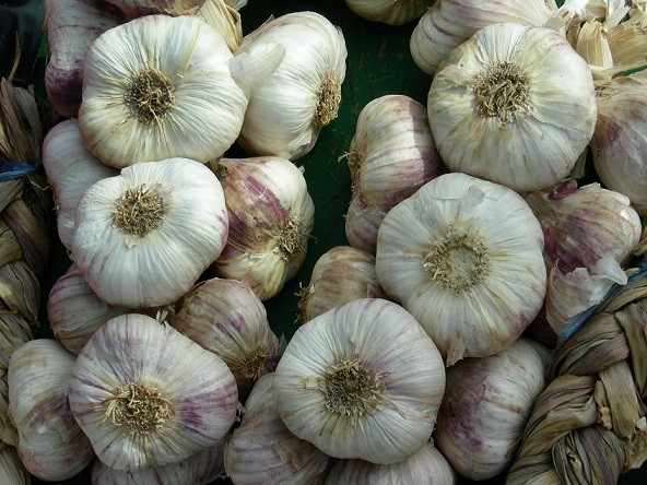garlic, photo by Judith Siers-Poisson