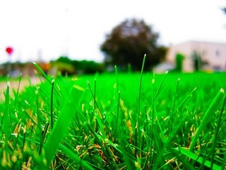 grass, image by Flickr user Nan Palmero
