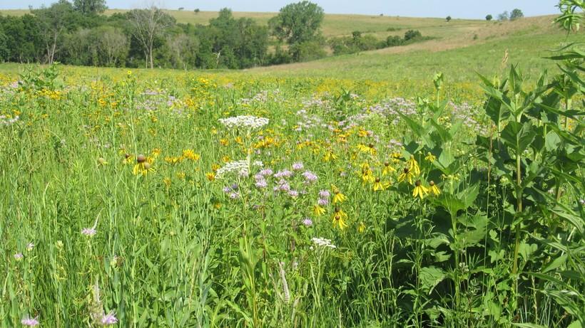 restored prairie, Iowa County, photo by Judith Siers-Poisson