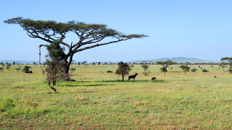 Antelope meets warthog under an acacia tree. <em>Steve Paulson (TTBOOK)</em>