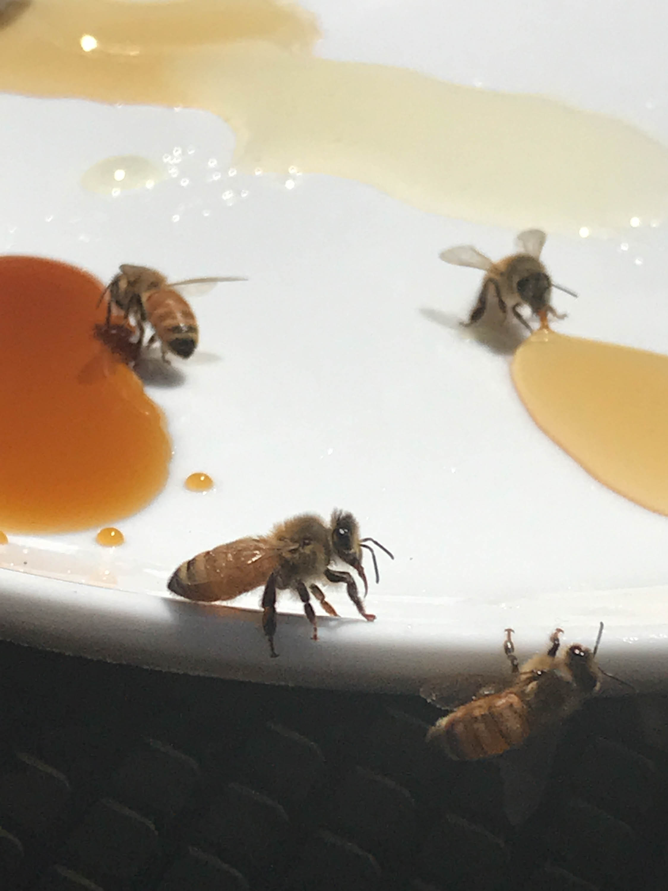 Heather, our crew and the bees gather for a honey taste test. The clearest honey came from Heather's hive. <em>Shannon Henry Kleiber (TTBOOK)</em>