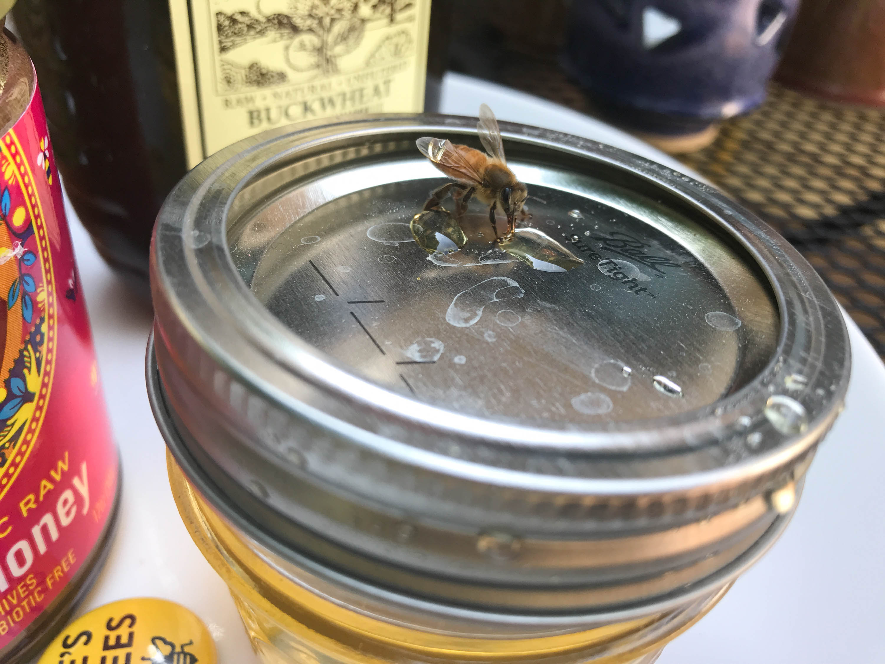 Heather, our crew and the bees gather for a honey taste test. The clearest honey came from Heather's hive.&nbsp;<em>Shannon Henry Kleiber (TTBOOK)</em>