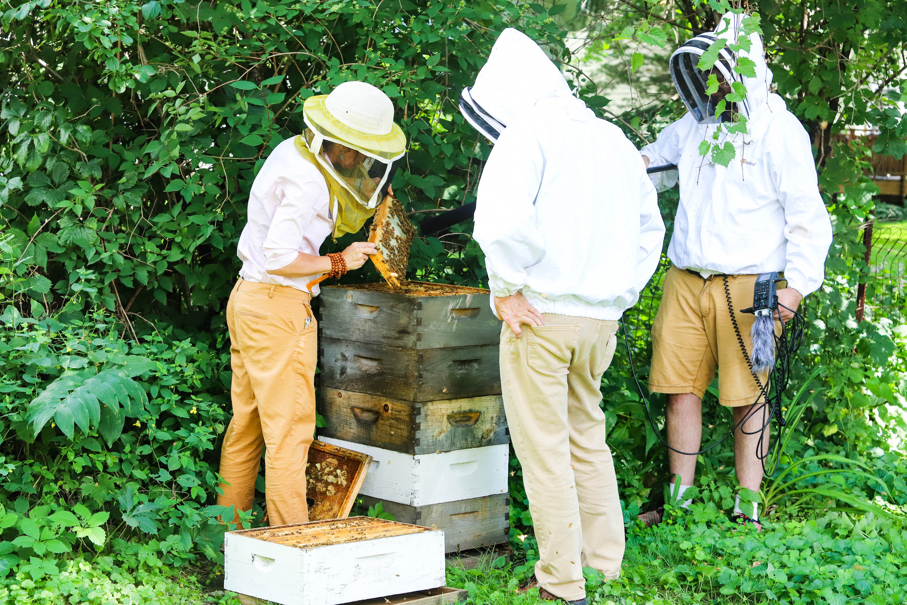 Steve learns about different bee sounds and hive activities while producer Mark Riechers gets in close to hear the bees come in and out. &nbsp;<em>Shannon Henry Kleiber (TTBOOK)</em>