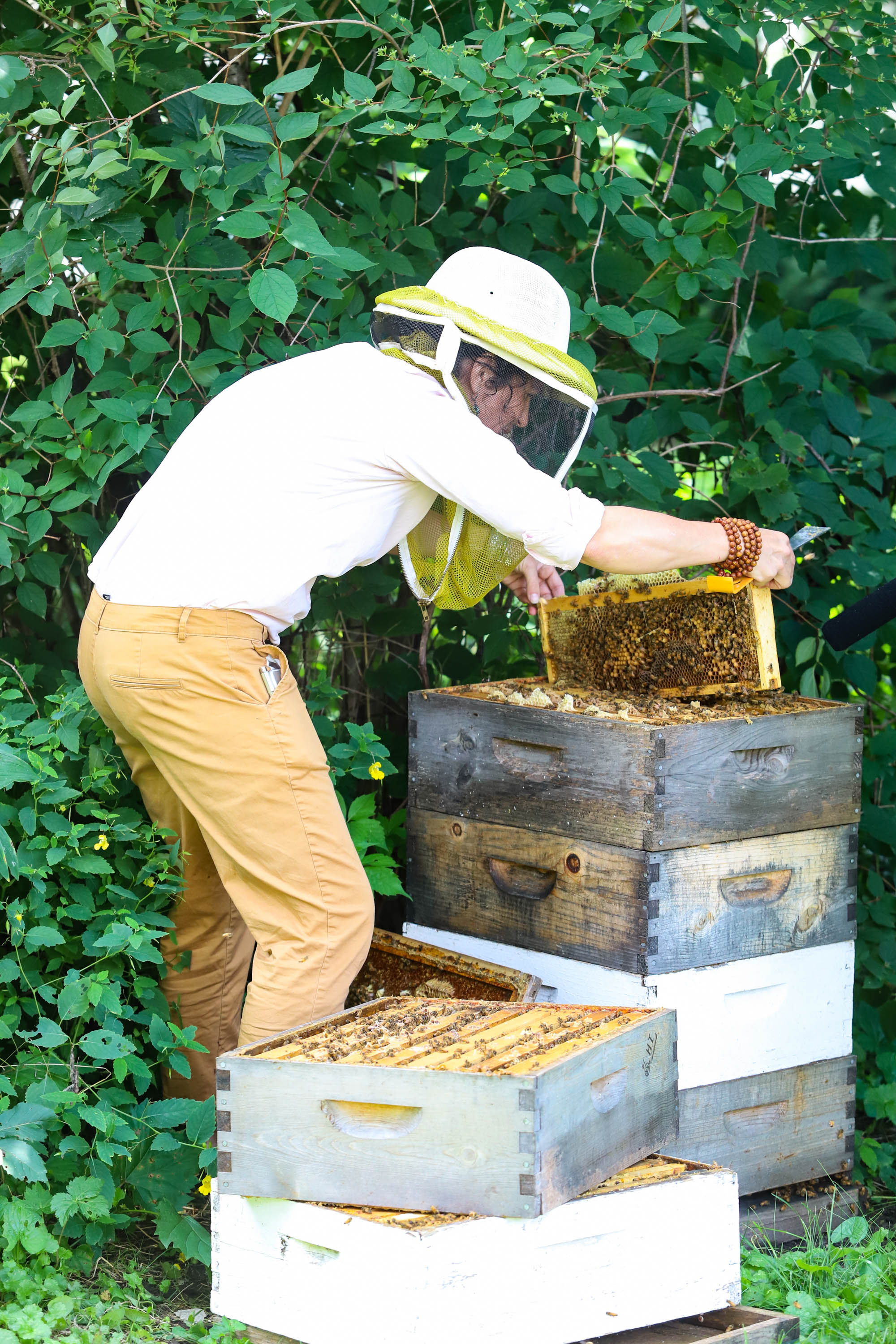We go deeper into the levels of the hive that house the queen and larval bees. <em>Shannon Henry Kleiber (TTBOOK)</em>