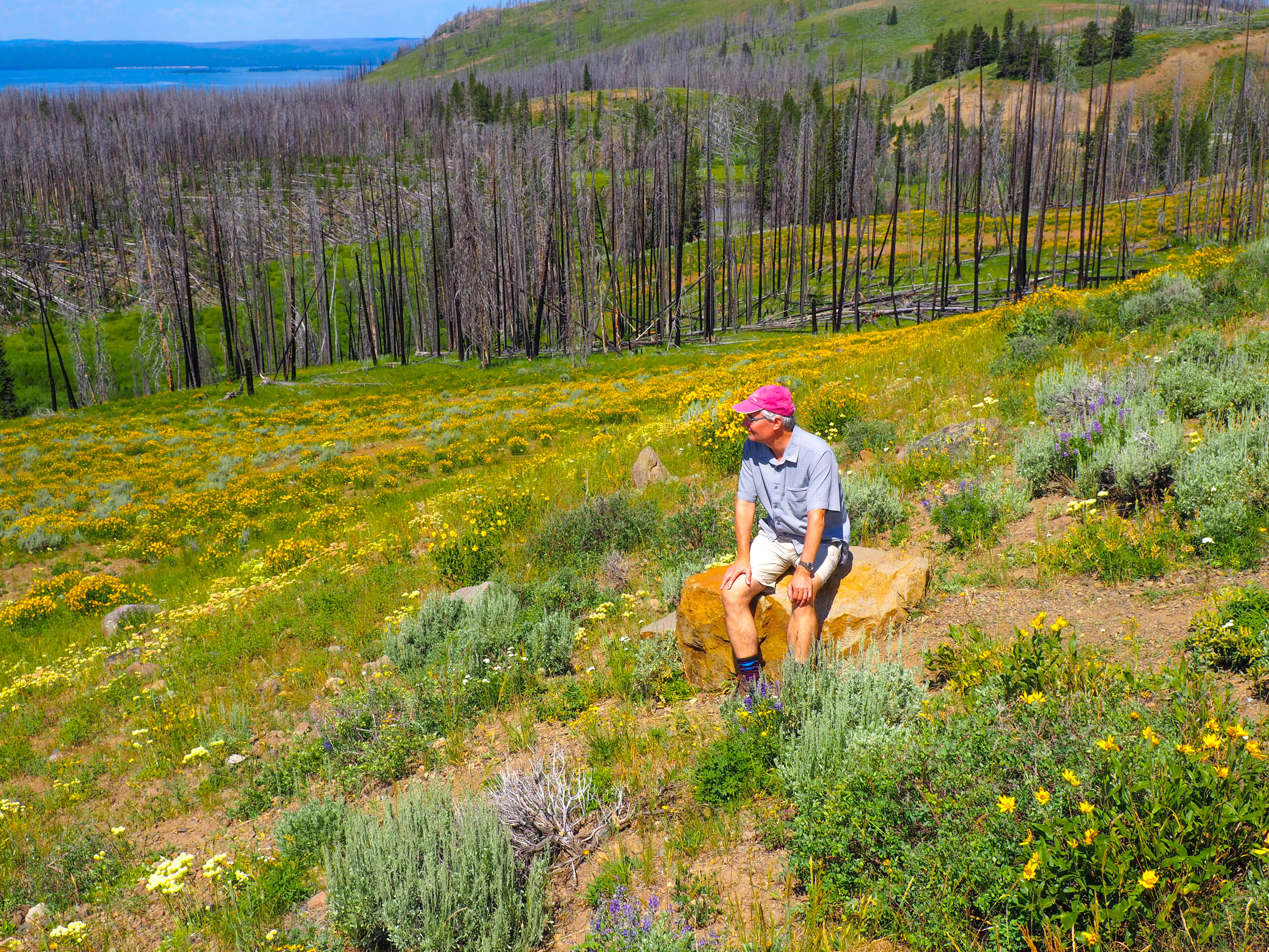 A thoughtful Steve Paulson viewing Yellowstone National Park. <em>Steve Paulson (TTBOOK)</em>