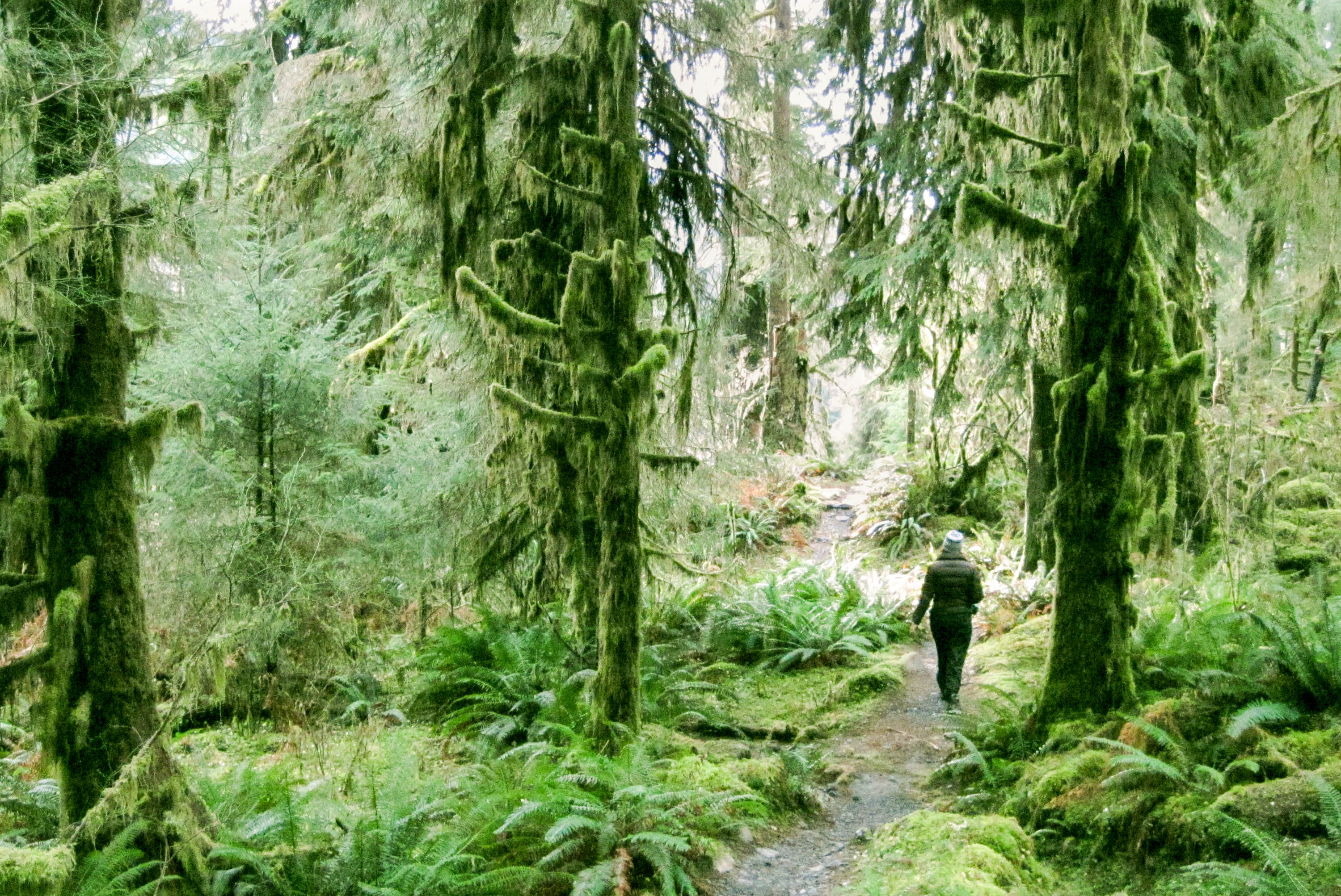 Hiking the Hoh River Trail on almost the darkest day of the year. <em>Amanda Castleman©</em>