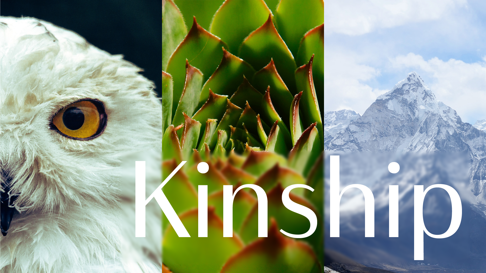 Kinship series from CHN and TTBOOK