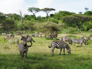 We came over one hill and saw hundreds of zebras.