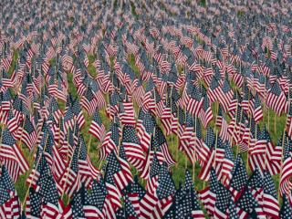 A field full of small American flags