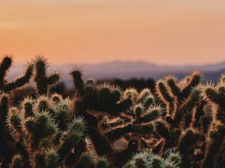 Desert at Joshua Tree