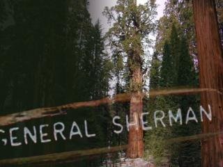 General Sherman, AKA Karl Marx