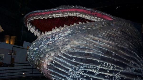 whale at House on the Rock