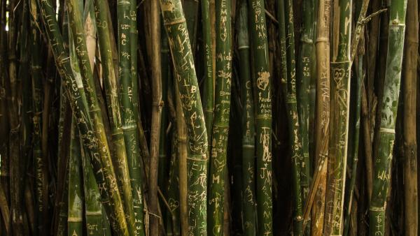 bamboo graffitt
