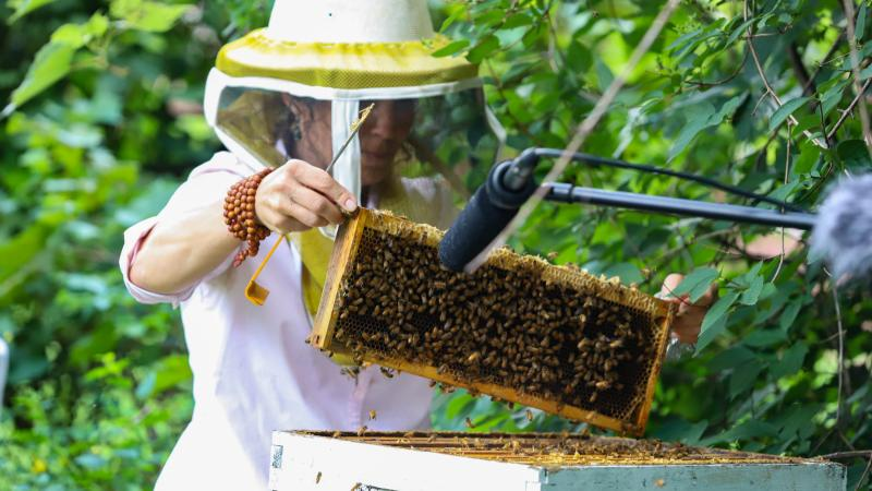 Removing one frame from the hive
