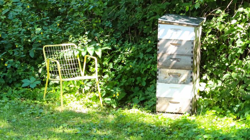 Where Heather and the bees converse