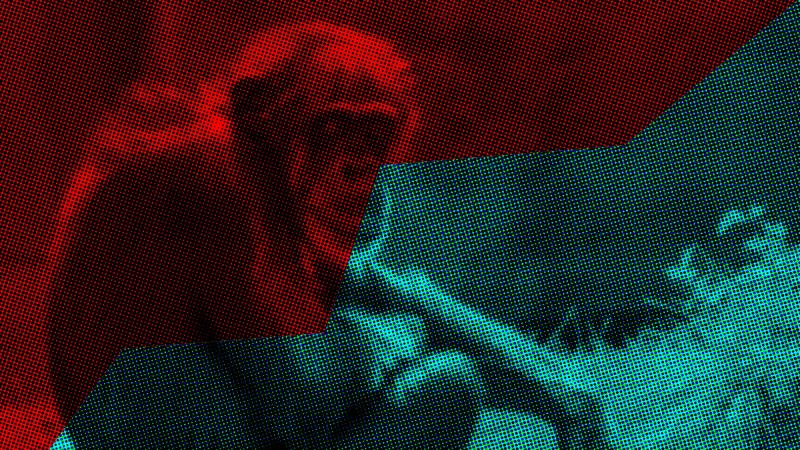 The moral evolution