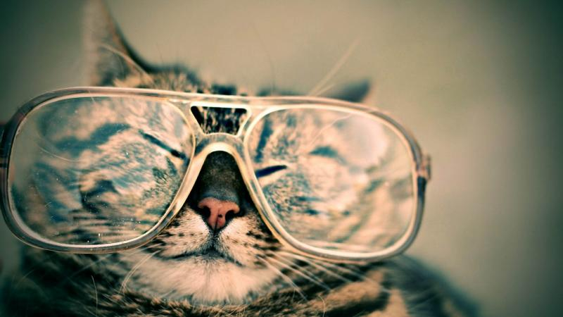A hipster cat poses for a hipster photo opp.