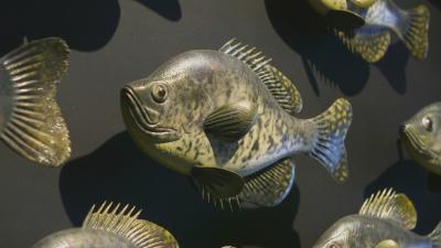 Fish carved from wood