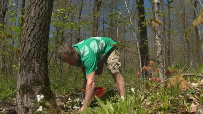 Man foraging in woods