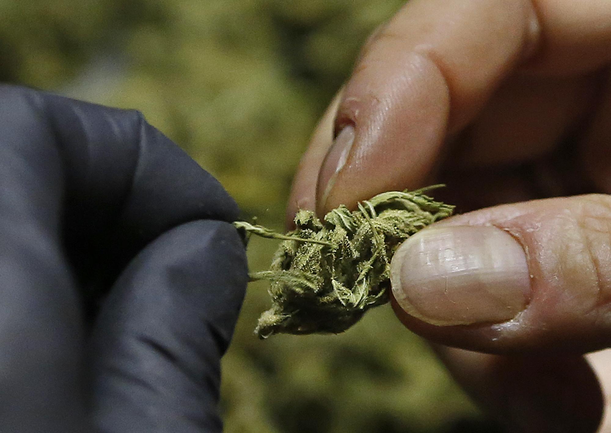 Legislature Asked To Clarify Patchwork Of Marijuana Laws