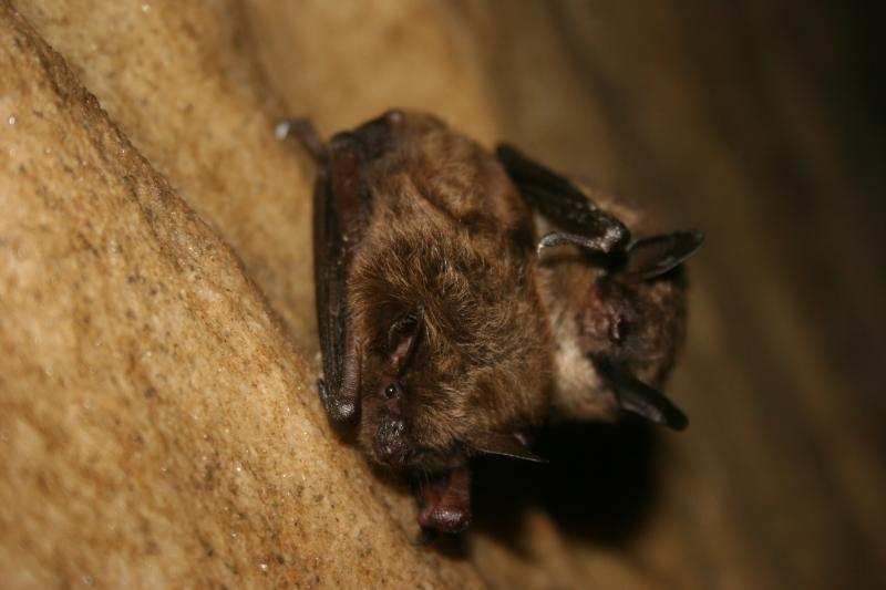 Paul Brown Dodge >> Fall Nights Bring Out The Bats As They Migrate | Wisconsin ...