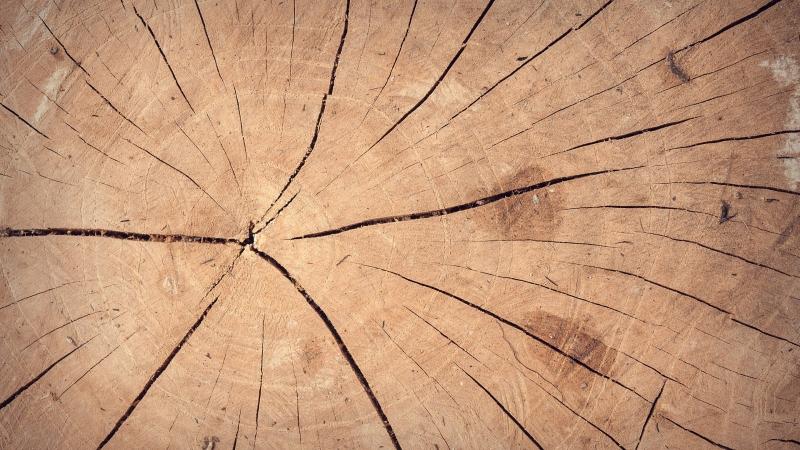 end grain cut of log