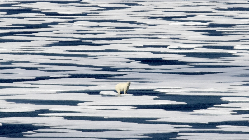 A polar bear standing on ice in the Canadian Arctic Archipelago