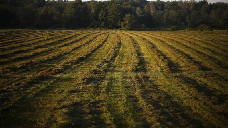 A field at a PFAS-contaminated farm