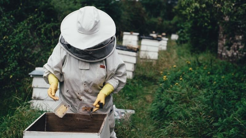 Beekeeper tending to a hive.