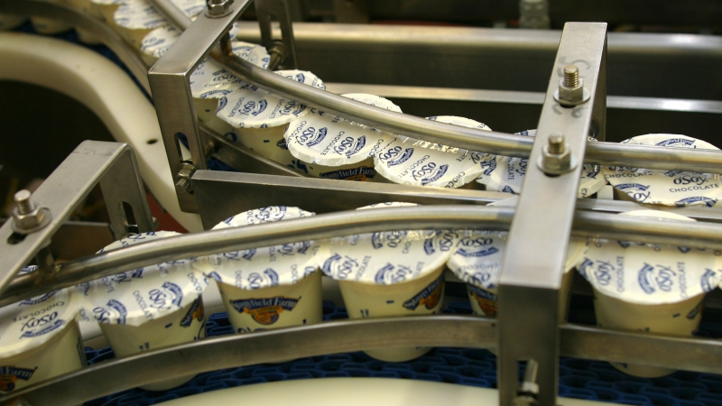 Stonyfield Farm's Chocolate O'Soy rides a conveyor on it's way to packaging